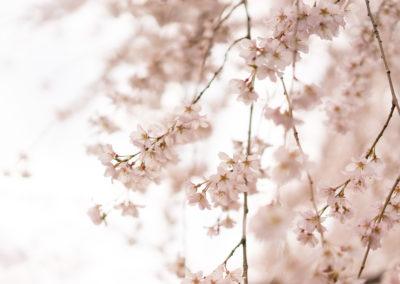 Detoxification in Spring
